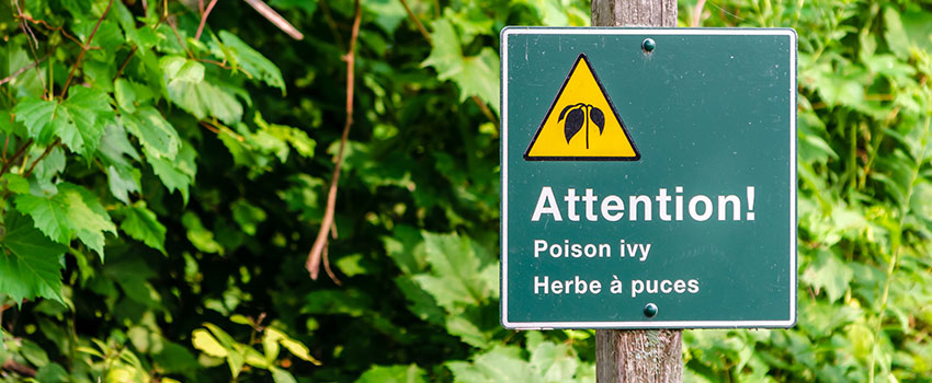 Is It Possible to Be Mildly Allergic to Poison Ivy?